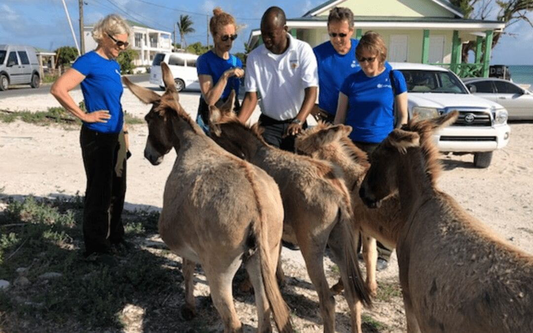 How New Hearing Aids Helps Keep Donkeys in Check